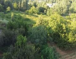 تونس اليوم - المندوبية الجهوية للفلاحة تتوقع بلوغ الزيتون  إلي 152 ألف طن في مدينة المهدية