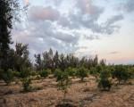 تونس اليوم - شبكة تونس الخضراء تؤكد أن الوضع البيئي في تونس خطر داهم يتطلب تدخلا عاجلا
